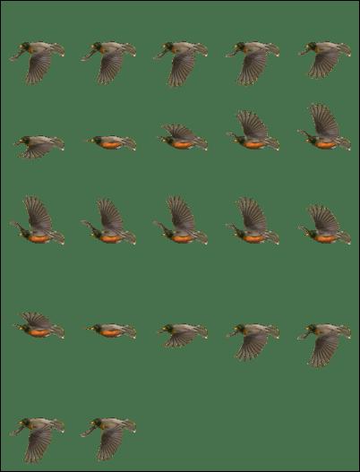 robin-782x1024